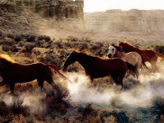 Quarter Horses in Motion
