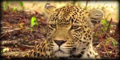 Our stunning Queen Karula on #safarilive 11-16-16 @jamiepaterson4