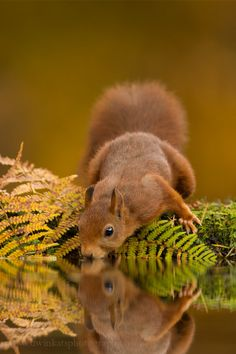 Autumn Red by Edwin Kats on 500px*