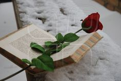 winter day and nice surprise on an open book: a red rose with snow background on a public bench