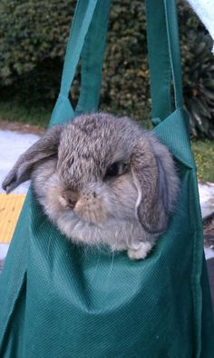 Stowaway Bunny Will Find a Way to Get to the Farmers' Market - June 26, 2011