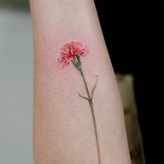 carnation your body is a wonderland pinterest carnation rh pinterest com carnation tattoos carnation tattoos designs
