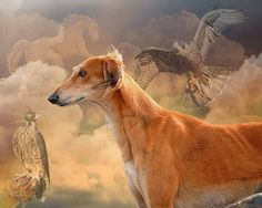From FB entry in Athletic Dogs May 14 2013 - digitally altered art photograph by Judy Wood. Ahh - it's another lovely black-fringed, red saluki, dreaming of its heritage