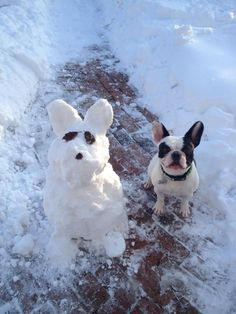 Bubba Louie made a Snow Frenchie, French Bulldog