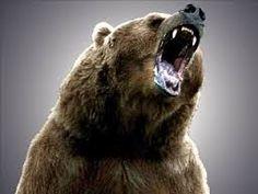 Afbeeldingsresultaat voor grizzly bear attack