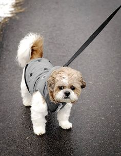 Canada Fouse Coat by FouFou Dog