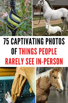75 Captivating photos of things people rarely see in-person