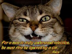 Cute Cat Pictures with Sayings | this BB Code for forums: [url=http://www.quotesbuddy.com/cat-quotes ...