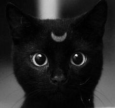 Kocham koty profil randkowy