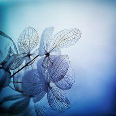 mood indigo | Flickr - Photo Sharing!