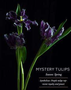DesignSponge Flower Glossary: Mystery Tulips
