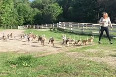 This Stampede of Baby Goats Is What You Need to Start Your Day [WATCH]