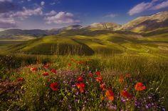 poppies by Dino Marsango on 500px