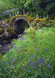 Fasnacloich bluebells by Richard Childs, via Flickr