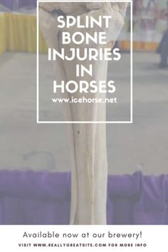 Learn more about splint injuries in horses and what you can do about a splint injury to your horse. Ice therapy plays a large role in pain relief and healing.