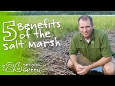 How the Salt Marsh Works | 26 Second Green