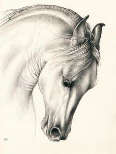 Drawing Portraits - Classic Andalusian Horse by Evey Studios Discover The Secrets Of Drawing Realistic Pencil Portraits.Let Me Show You How You Too Can Draw Realistic Pencil Portraits With My Truly Step-by-Step Guide. Horse Drawings, Realistic Drawings, Animal Drawings, Pencil Drawings, Art Drawings, Charcoal Drawings, Pencil Art, Classic Equine, Horse Sketch