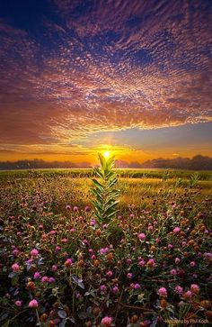 Sunset at Summer Field ~ Marvelous Nature