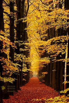 Golden Tunnel by Roeselien Raimond on 500px