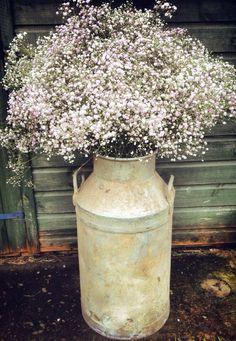 Vintage milk churn filled with gypsophila by Jenny Fleur