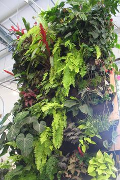 Biophilic Design Is Coming to a Building Near You - Ecological Landscape Alliance