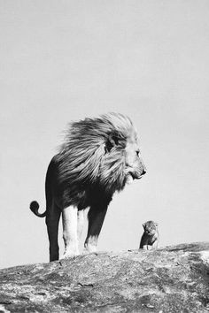 Beautiful shot of a lion and cub