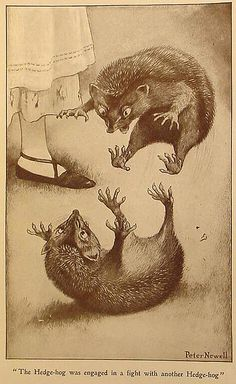 This was me all week.  I was two hedgehogs fighting with each other.  (Alice in Wonderland Peter Newell illustration, 1901.)