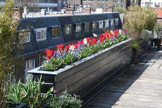 Springtime on my roofterrace.. dutch bulbs...  Photo by ConnyvdHvL