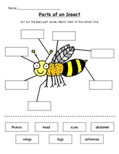 Learn the parts of insects! Students cut out the names of the body parts and glu… Learn the parts of insects! Students cut out the names of the body parts and glue them into the correct box. Bees For Kids, Bee Crafts For Kids, Preschool Science, Science For Kids, Insect Body Parts, Bug Parts, Insect Activities, Listening Activities, Insect Crafts