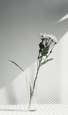 100 days in one dress — wool& Apple Wallpaper Iphone, Wallpaper Backgrounds, Flower Wallpaper, Apple Iphone, Aesthetic Backgrounds, Aesthetic Wallpapers, Minimal Photography, Simplicity Photography, Plant Pictures