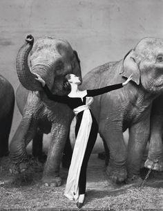 Ричард Аведон Довима со слонами для Dior 1955