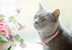 Cat and bouquet on windowsill
