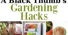 A Black Thumbs Guide To Gardening. #GreenThumb #GardenHacks #GardenTips #Summer #Outdoors