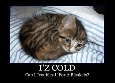Cold kitty - I'll cuddle with you!