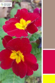 Palette gris, framboise et jaune. Découvre des conseils pour créer la palette de couleurs de ta marque pas à pas. Colorful Flowers, Beautiful Flowers, Wonderland, Cactus, Plants, Inspiration, Gray, Colors, Yellow