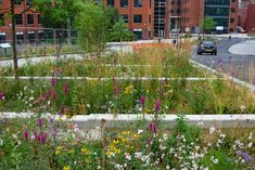Sheffield's Grey to Green SUDS scheme & green street, August.