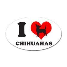 I have 1 chihuahua