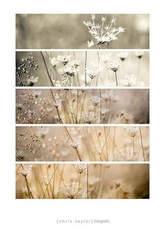weeds x 5 by christaylorfotografs, via Flickr