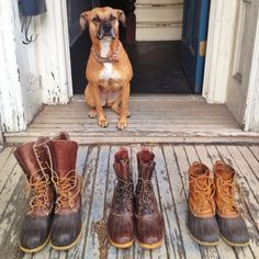 """gntlmn: """"George the Girl Dog, watching over my personal collection of LL Bean duck boots, on my Brooklyn porch. LL Bean one of my favorite brands and I'd like to put it out into the universe that we'd love to work with them on an amazing project in..."""