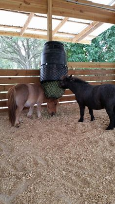 Horse Hay, Horse Paddock, Horse Love, Horses, Horse Stalls, Horse Barns, Horse Feeder, Horse Shelter, Horse Barn Plans