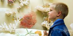 Find Small Boy Examine Corals Museum stock images in HD and millions of other royalty-free stock photos, illustrations and vectors in the Shutterstock collection. Fun Learning, Learning Activities, Todays Parent, Cheap Things To Do, Free Summer, Summer Kids, Small Boy, Fall Family, Family Night