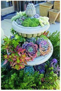 Fontana con Succulente piantati al posto dell'acqua