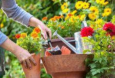 Dona Flor | Nutrientes para Plantas - 5 materiais que facilitam drenagem dos vasos