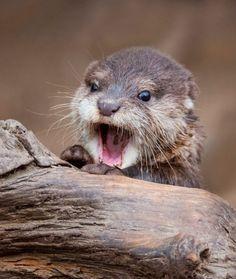 Otter Baby by © Ondrej Chvátal