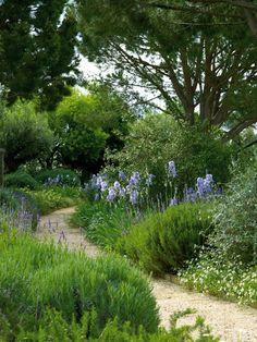 .Lavender, Iris Barbata, Rosemary