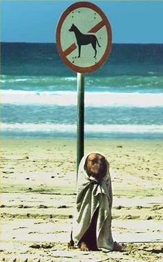 poor doggie! #beach #dog #humor