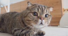 Funny Cute Cats, Cute Baby Cats, Funny Animal Pictures, Funny Animals, Cute Animals, Cat Emoji, Munchkin Cat, Cute Creatures, Beautiful Cats