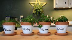 (DIY) Indoor Herb Garden - Perfect for Apartment Living Herb Garden, Garden Beds, Arts And Crafts, Diy Crafts, Herbs Indoors, Craft Gifts, Flower Power, Diys, Planter Pots