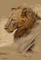 Lion Portrait  by Aaron Blaise