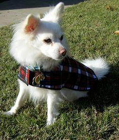 Sew DoggyStyle: November 2010